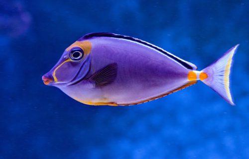 leven als een vis in helder water